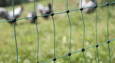 articolo-recinzione-animali